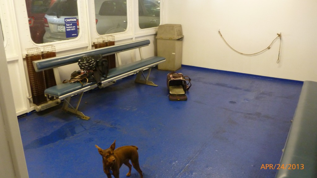 Dash in the Pet Area on the ferry - we were the only pet riders for this crossing