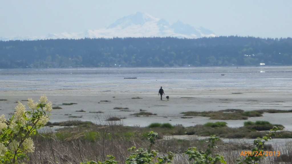 Man walking a dog on mud bay