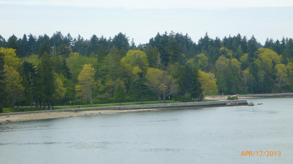 Different shades of green in Stanley Park