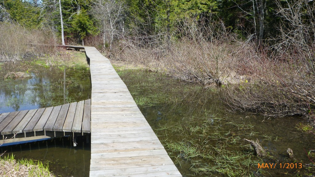 Boardwalk on the skunk cabbage trail