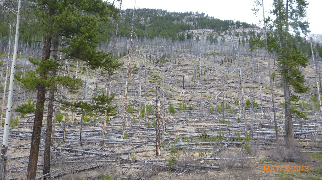 This section had a lot of fallen trees