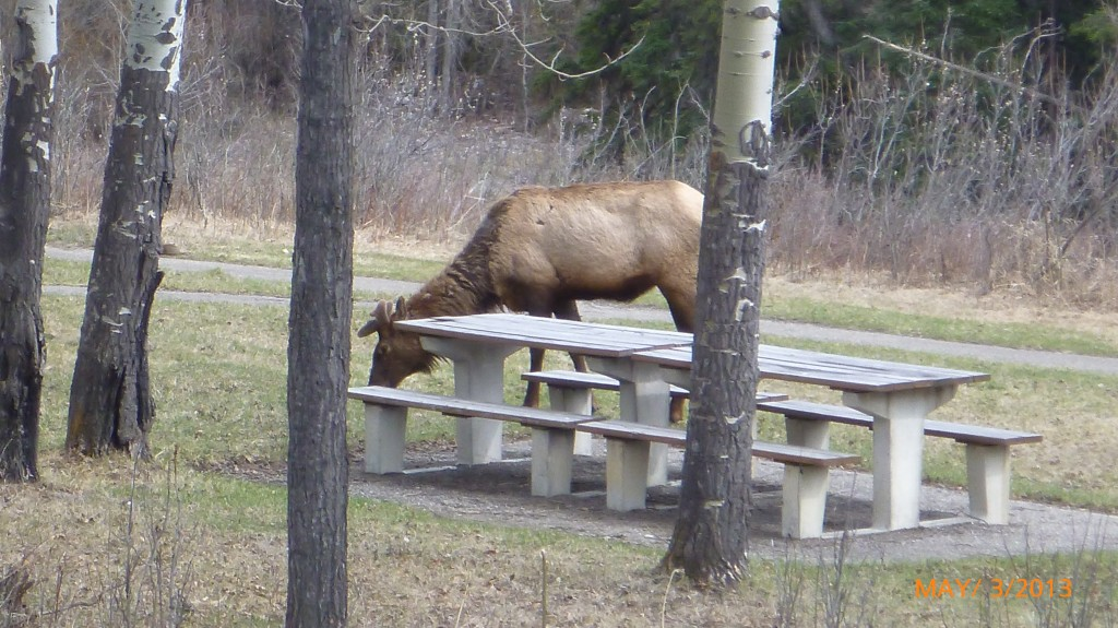 Another pic of the elk
