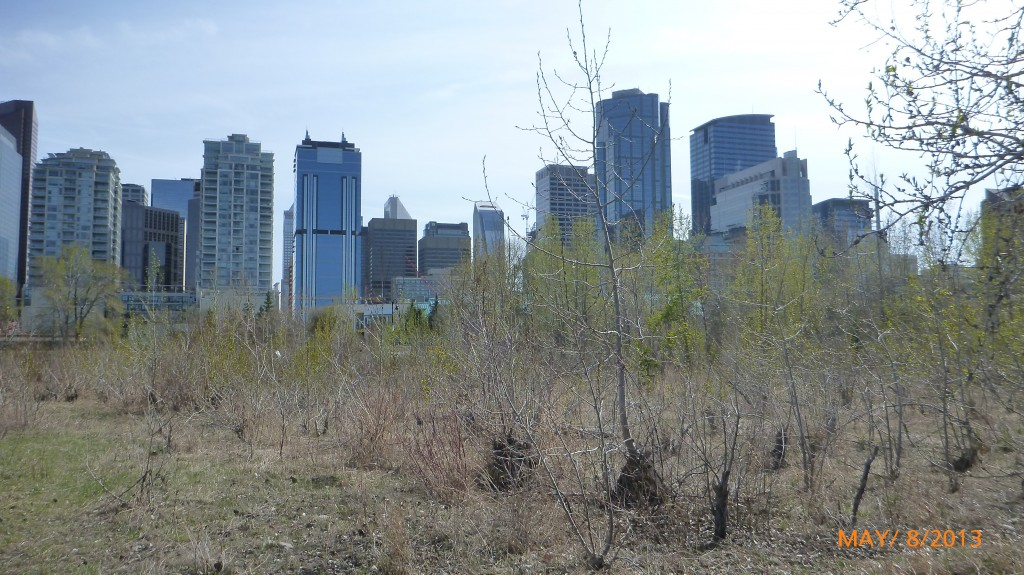 Downtown Calgary from the park