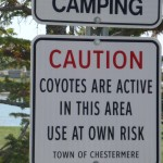 I took my chances and fortunately saw no coyotes in this park