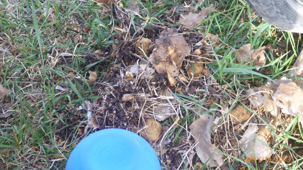While I was setting up camp, Dash was busy burying her food in the dirt