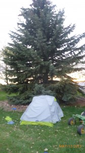 After Dash's tumbleweed experience I decided to move the tent behind the cover of a solid looking tree