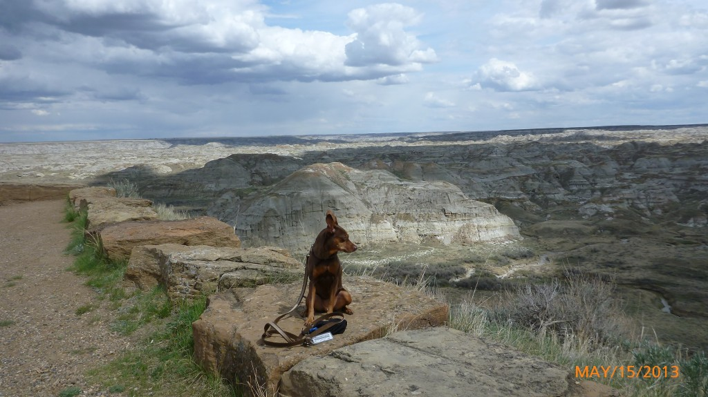 Dash looking out at the badlands