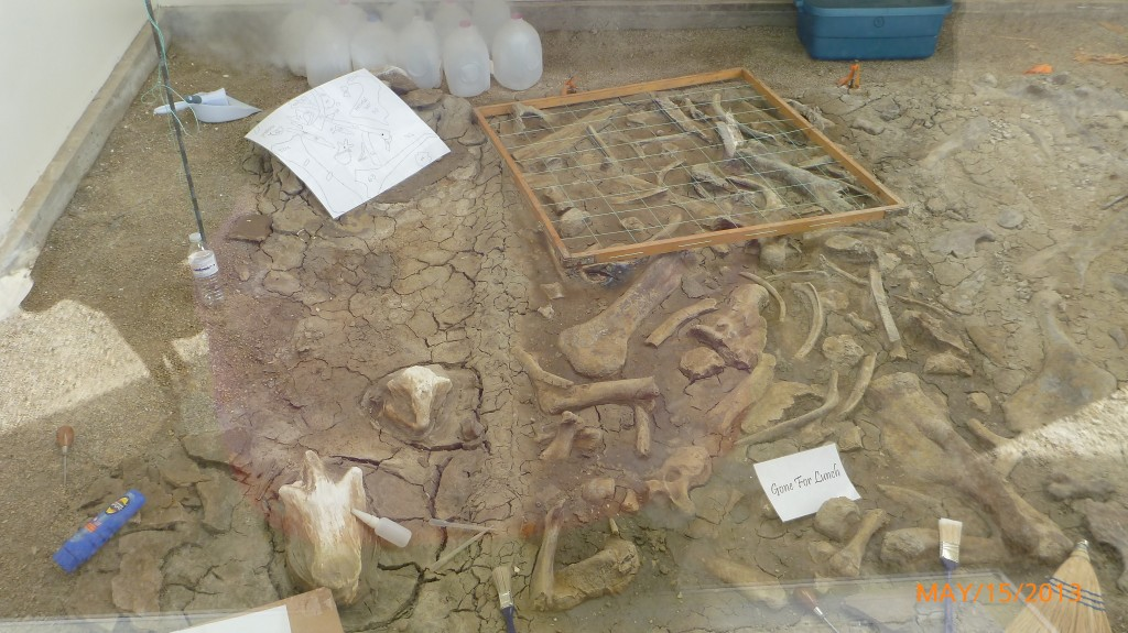 Part of what a fossil excavation site looks like