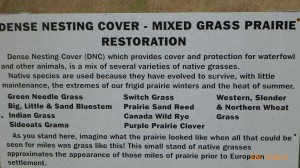 Some info on the prairie grass