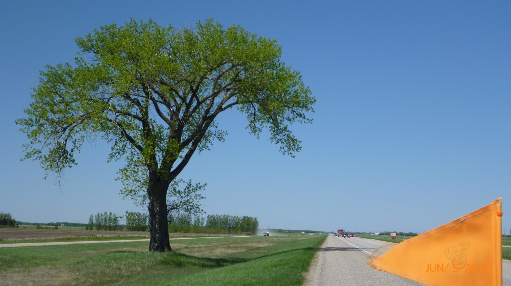 The first shade tree on Hwy 1 in over 1000km!