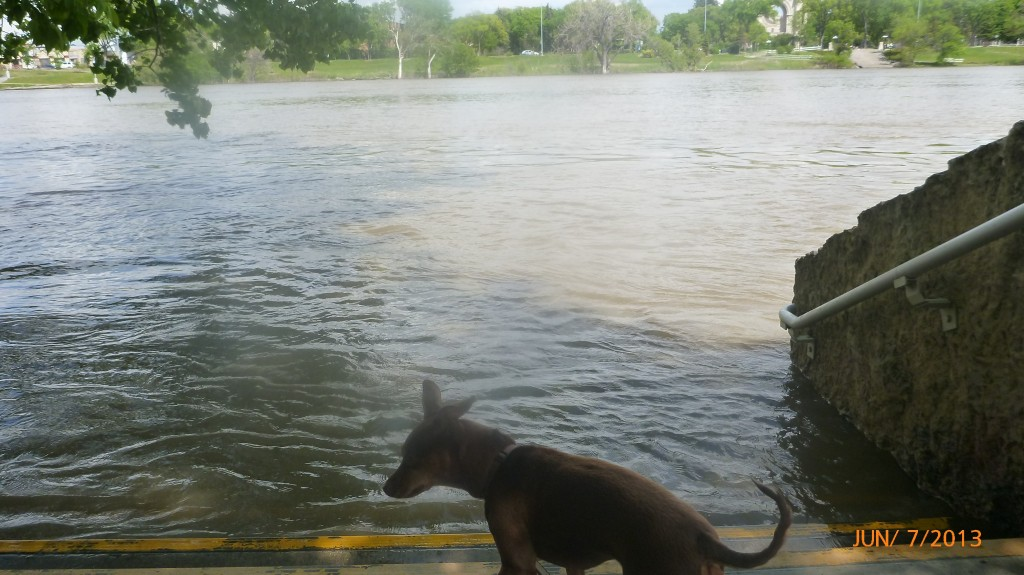 Dash checking out the Red River