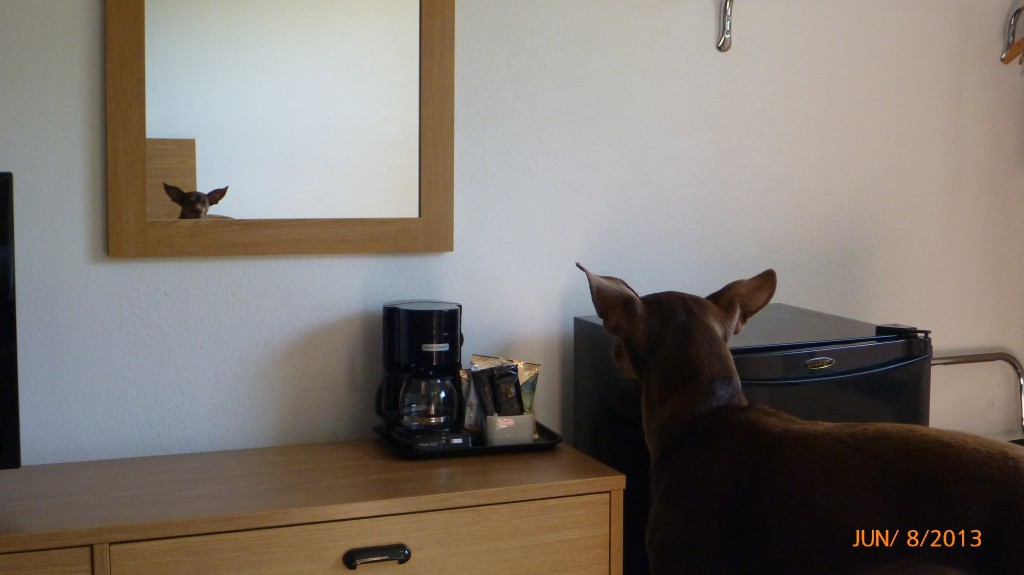Dash finding a friend in the mirror...