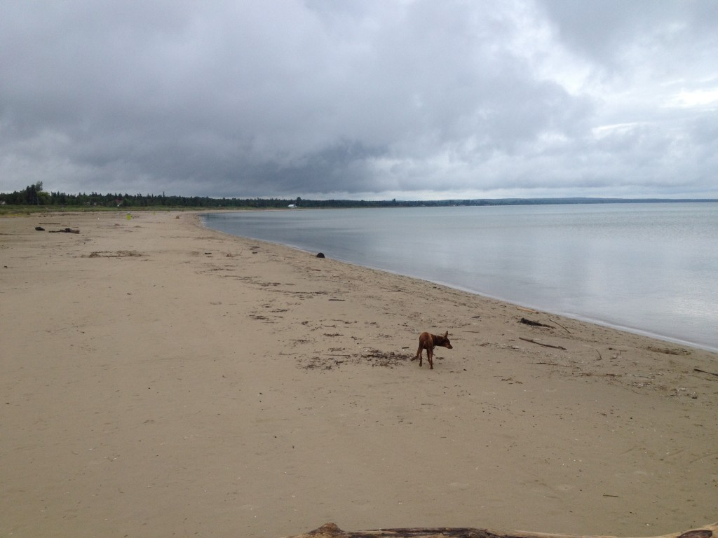 Dash running on the beach