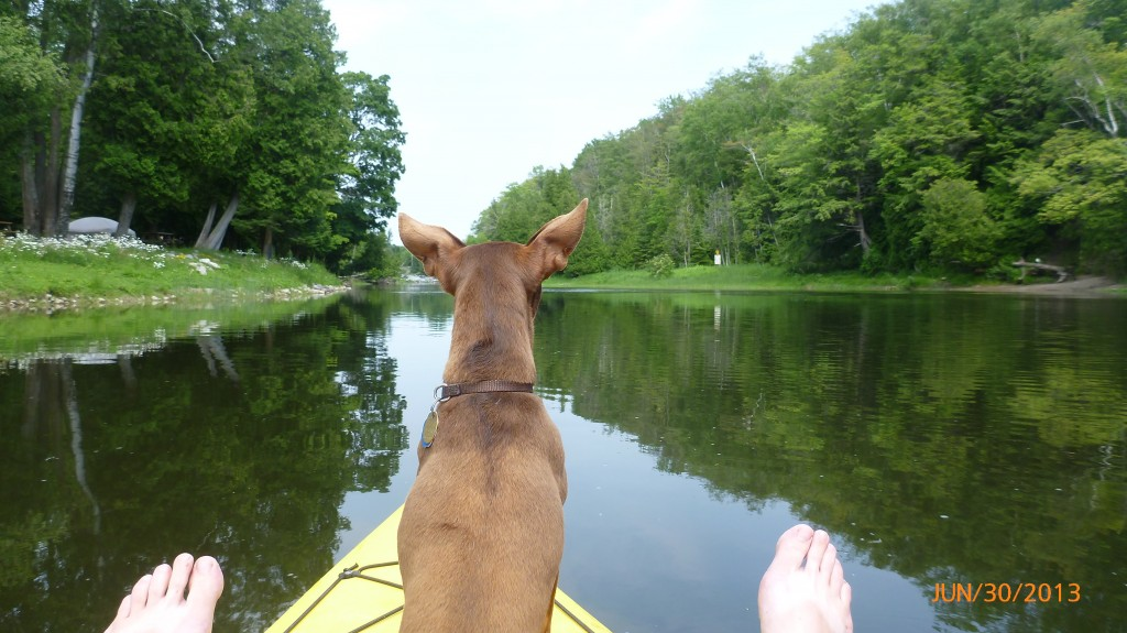 Dash keeping a close eye on the Sauble River
