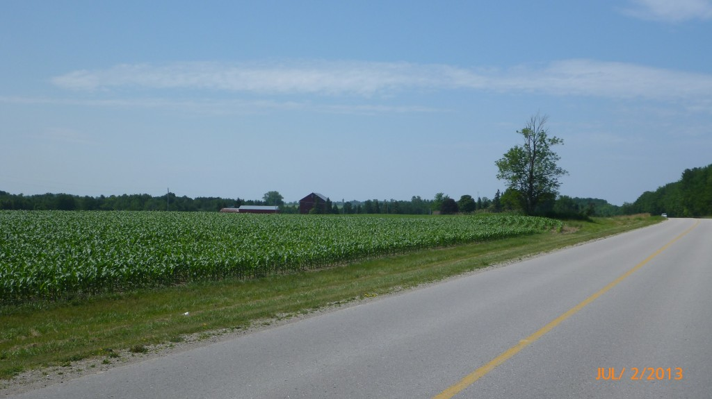 Farmland along the way.  It's interesting to watch the corn get higher and higher as the days go by (and me still cycling! lol!)