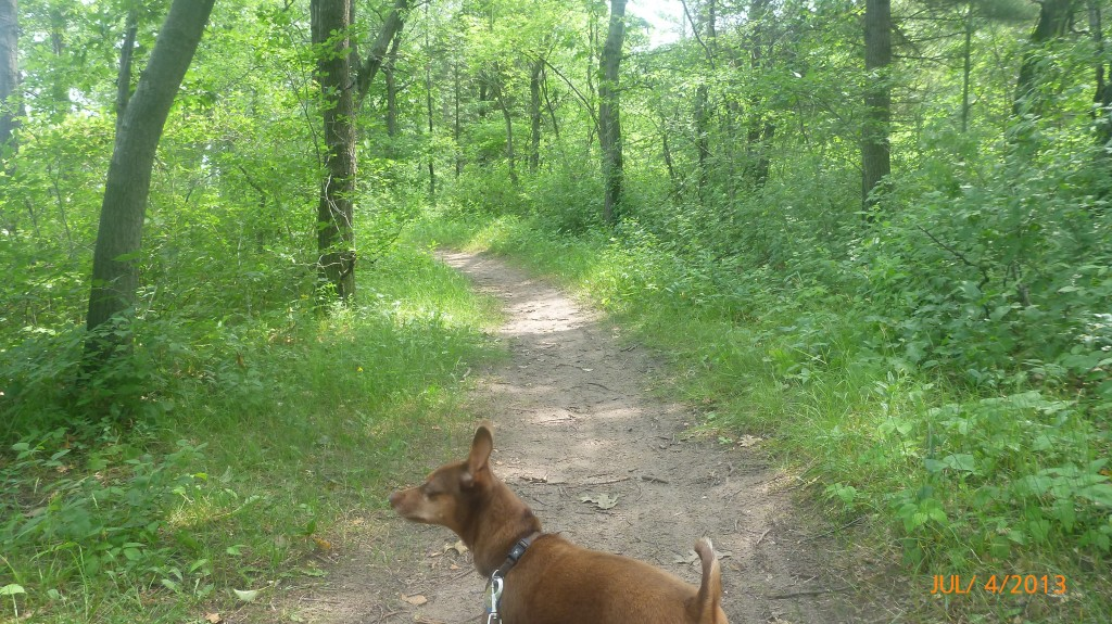 Hiking the trails in the Pinery Provincial Campground