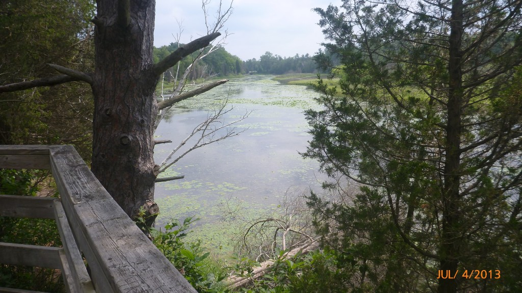 River in the Pinery