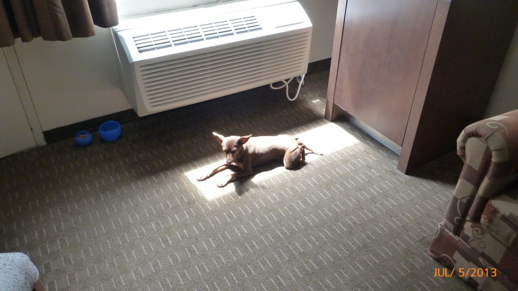 Dash just can't get enough of the sun