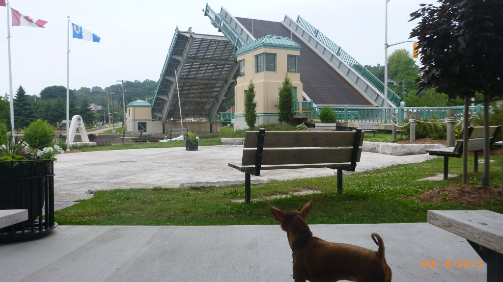 Anything that makes noise (such as a lifting bridge) draws Dash's attention.