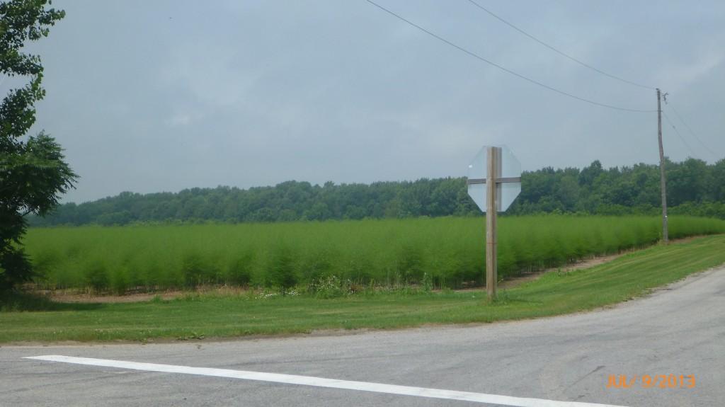 Farmland along Lake Erie