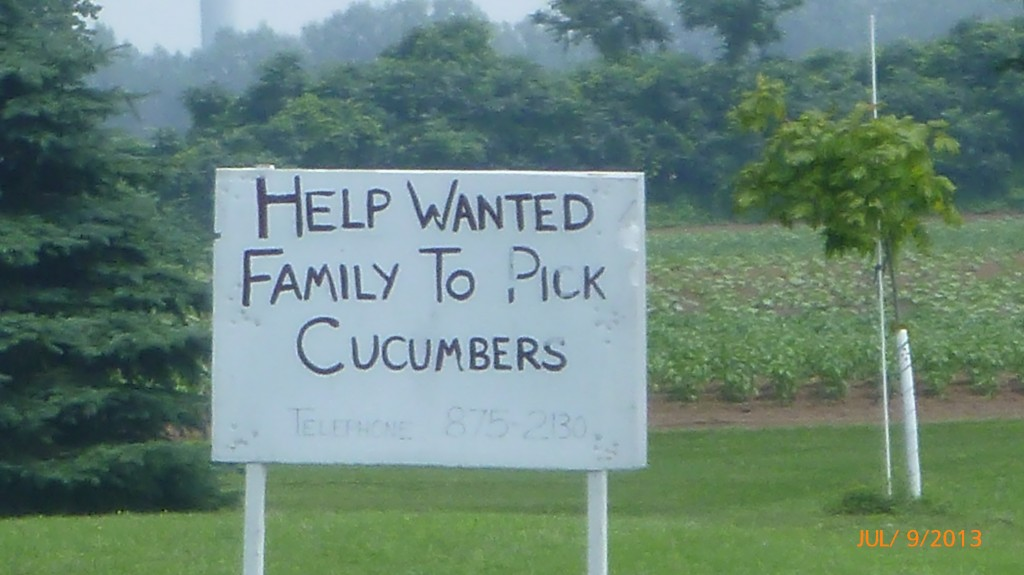My first job growing up was picking cucumbers, so I had to stop and take a pic of this sign!