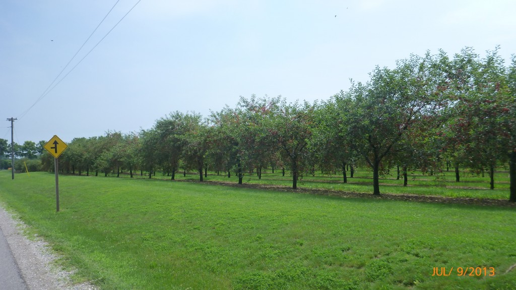 And another picture of a cherry orchard