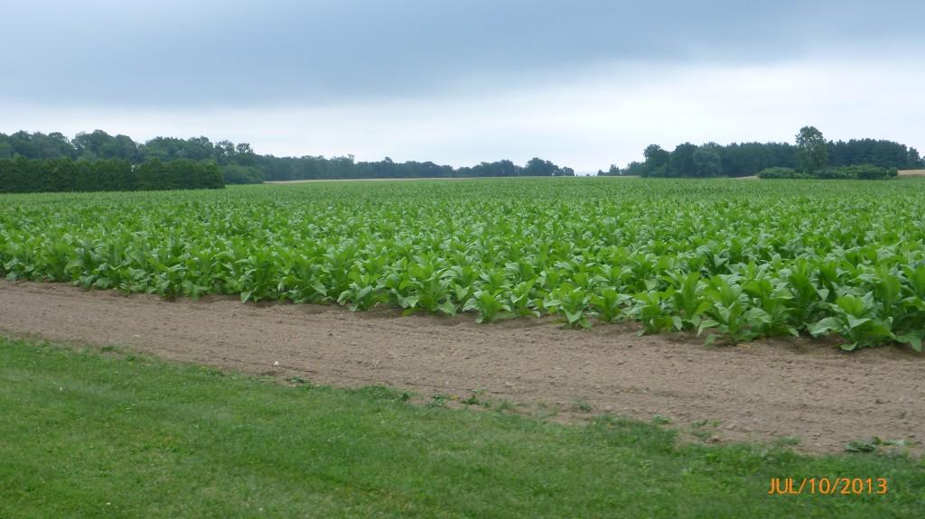 More farmland!