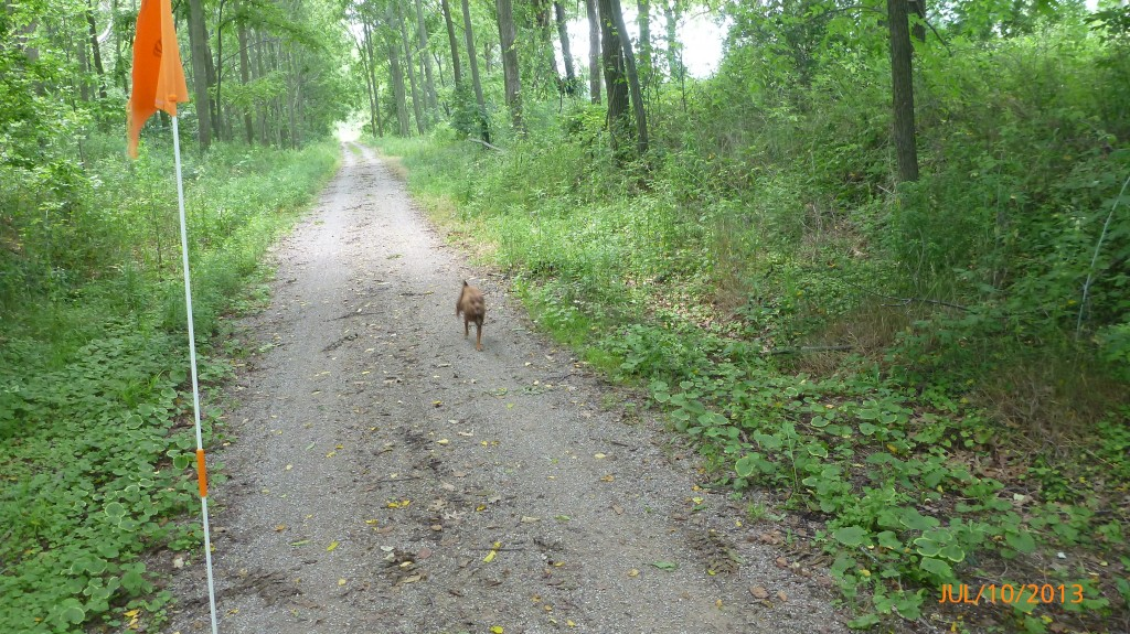 Dash stretching her legs (but only for 5km 'cuz it was a HOT one today)