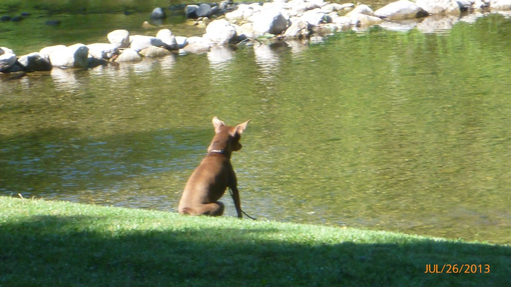 Dash keeping an eye on the creek.  No sudden movements...!