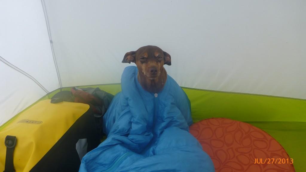 Dash stuck in the sleeping bag?
