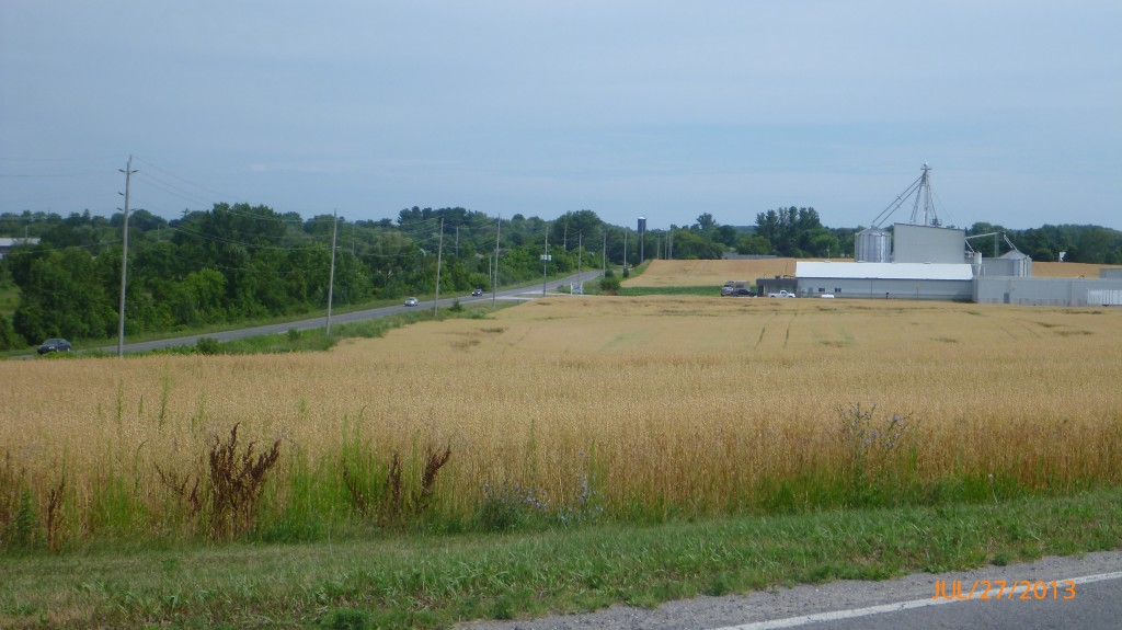 Farmland in Prince Edward County