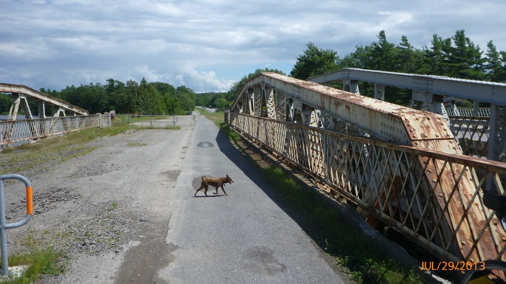 Dash checking out the bike paths bridge