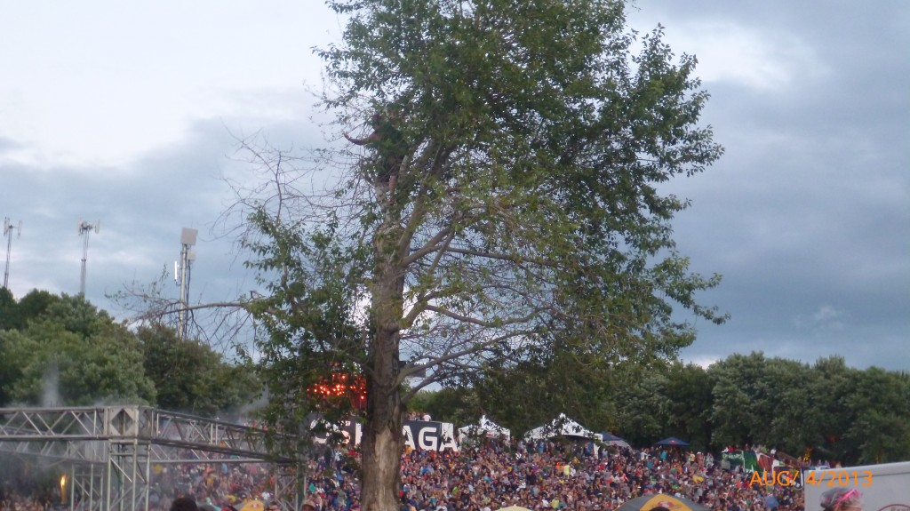 People climbing a tree at Osheaga