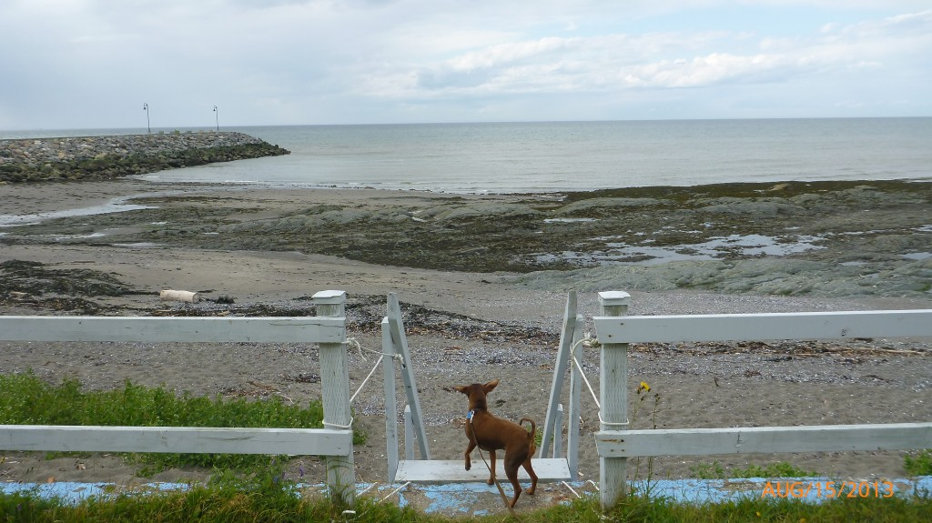 Dash checking out the view from our motel in Sainte-Flavie