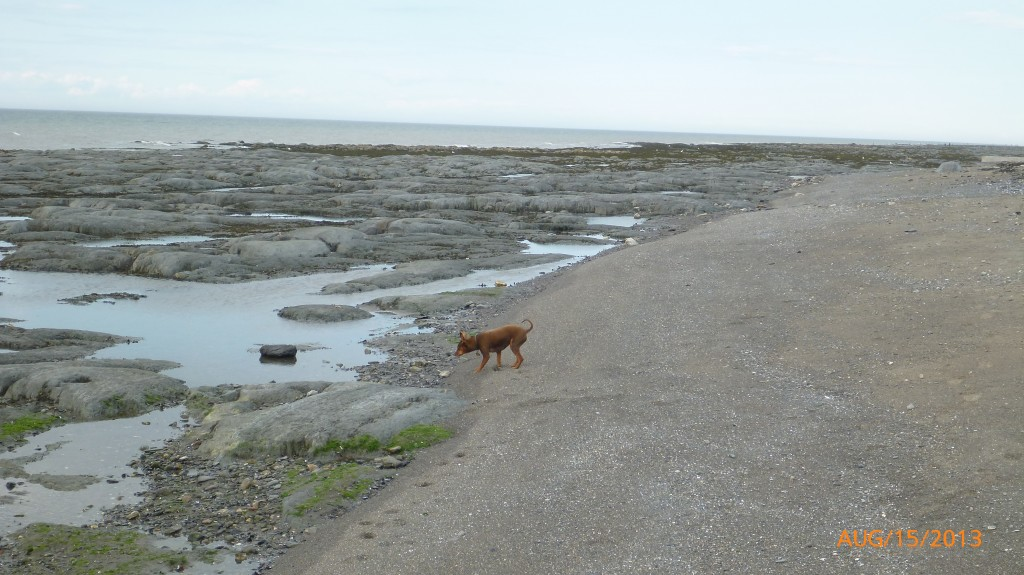 Taking a walk along the tidal bed