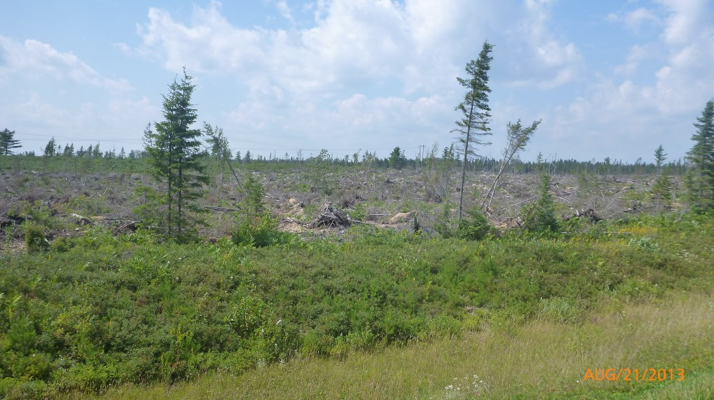 Some downed trees along why 8