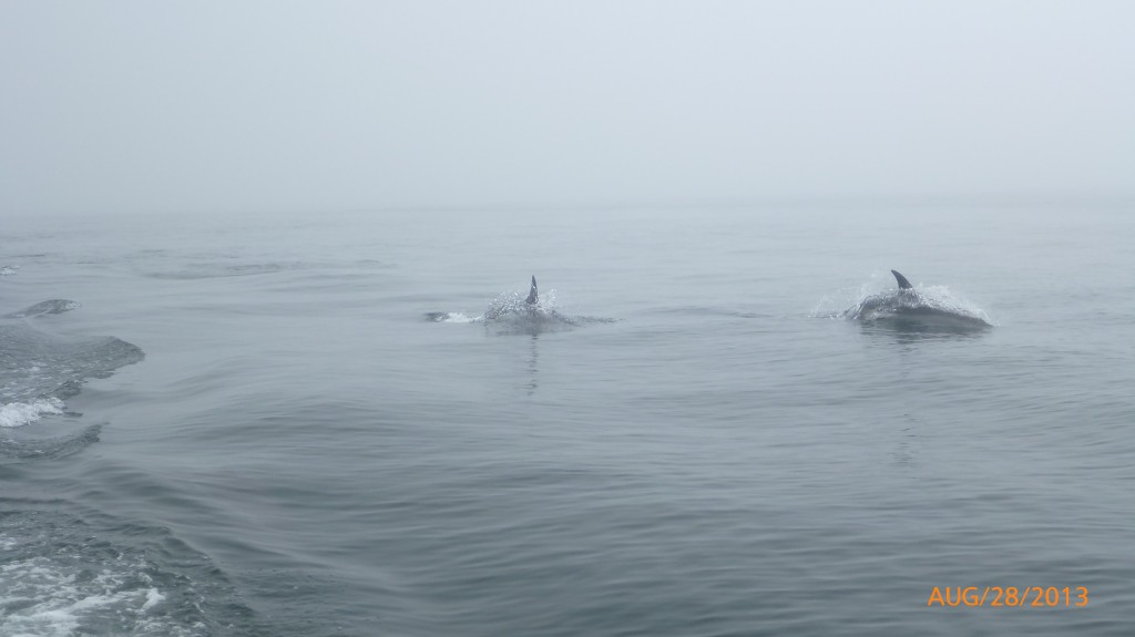 I was always too slow to get a picture of the dolphins mid jump