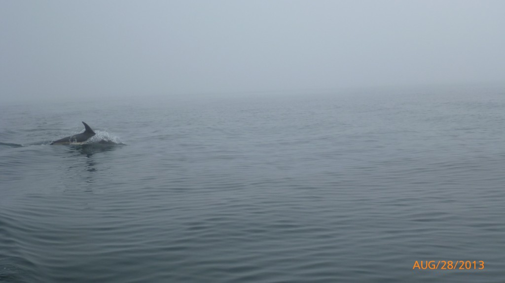 And the last of my dolphin shots (the rest of the dolphin pics were just ripples of water)