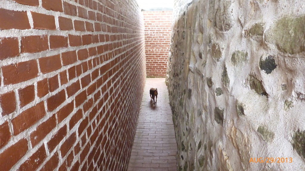 Dash walking the halls in at Fort Anne