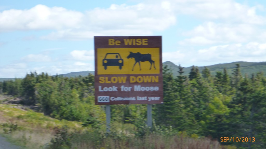 I was slightly disappointed to see no moose in Newfoundland