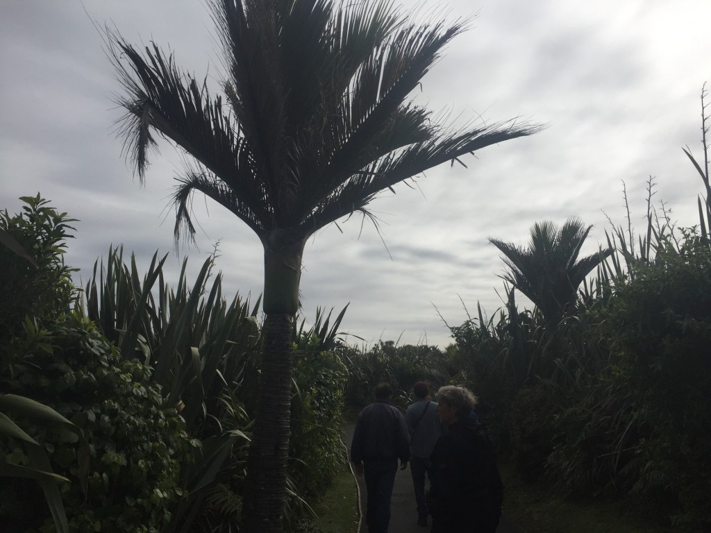 A form of palm tree - these are everywhere in Punakaiki