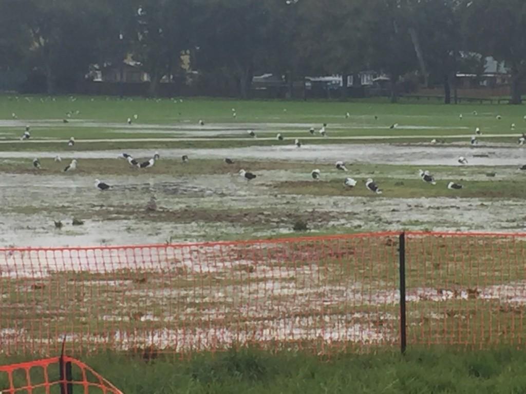 A field of birds!