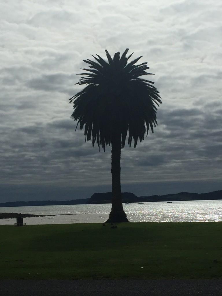 A lone palm tree