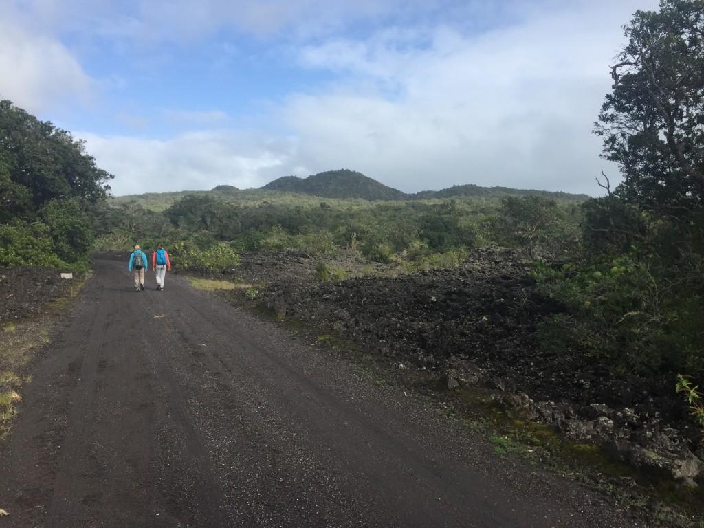 The trail leading to Rangitoto summit