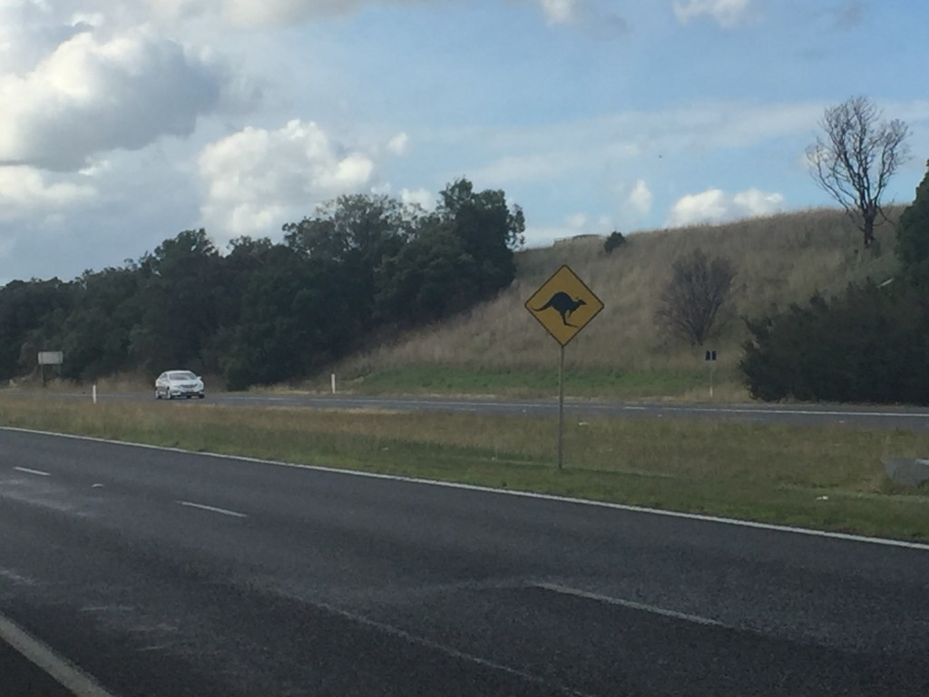 Other than 1 roadkill kangaroo, this sign was my only other kangaroo spotting today (I'm told seeing them as roadkill is common).  I'm also told that kangaroos are more active during dusk and dawn, so it's been advised that I stay off the road during these times