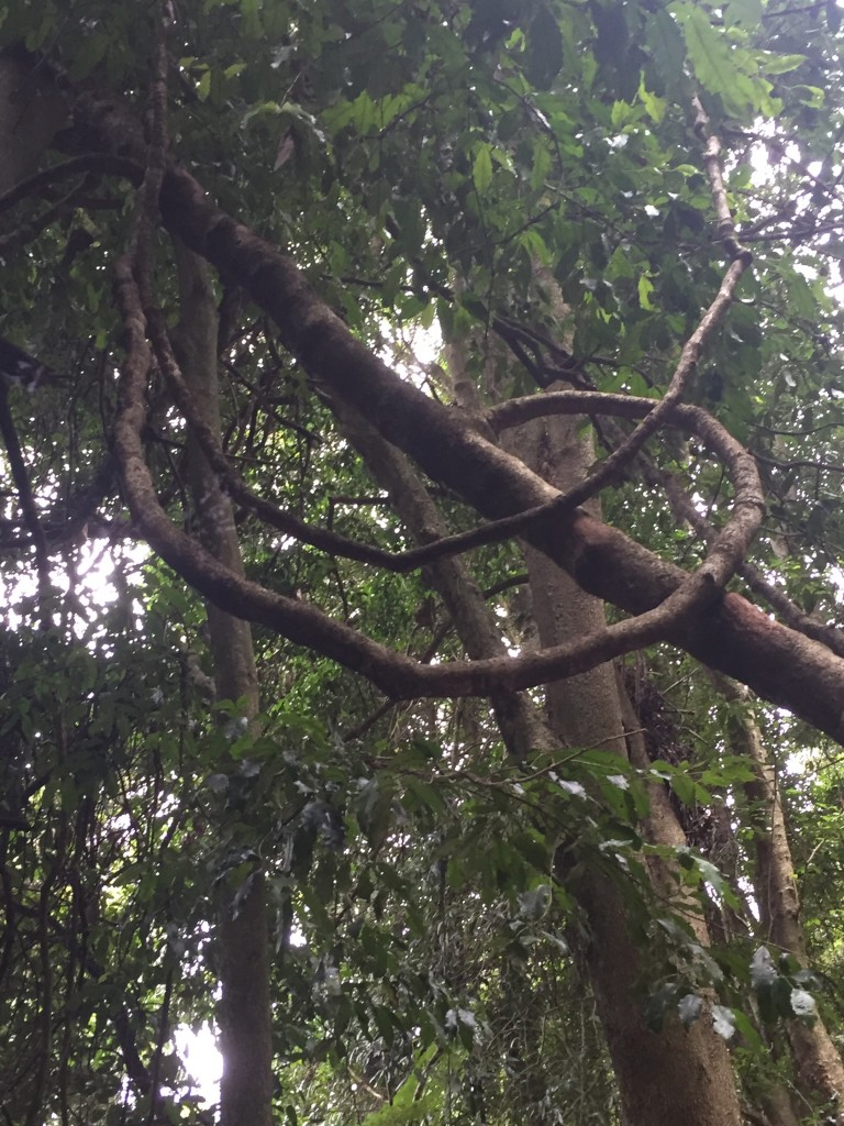 I luved all the vines on the trees in the rainforest