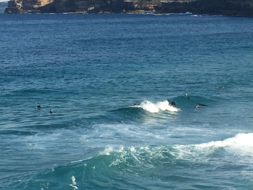 My first surfer sighting! :)