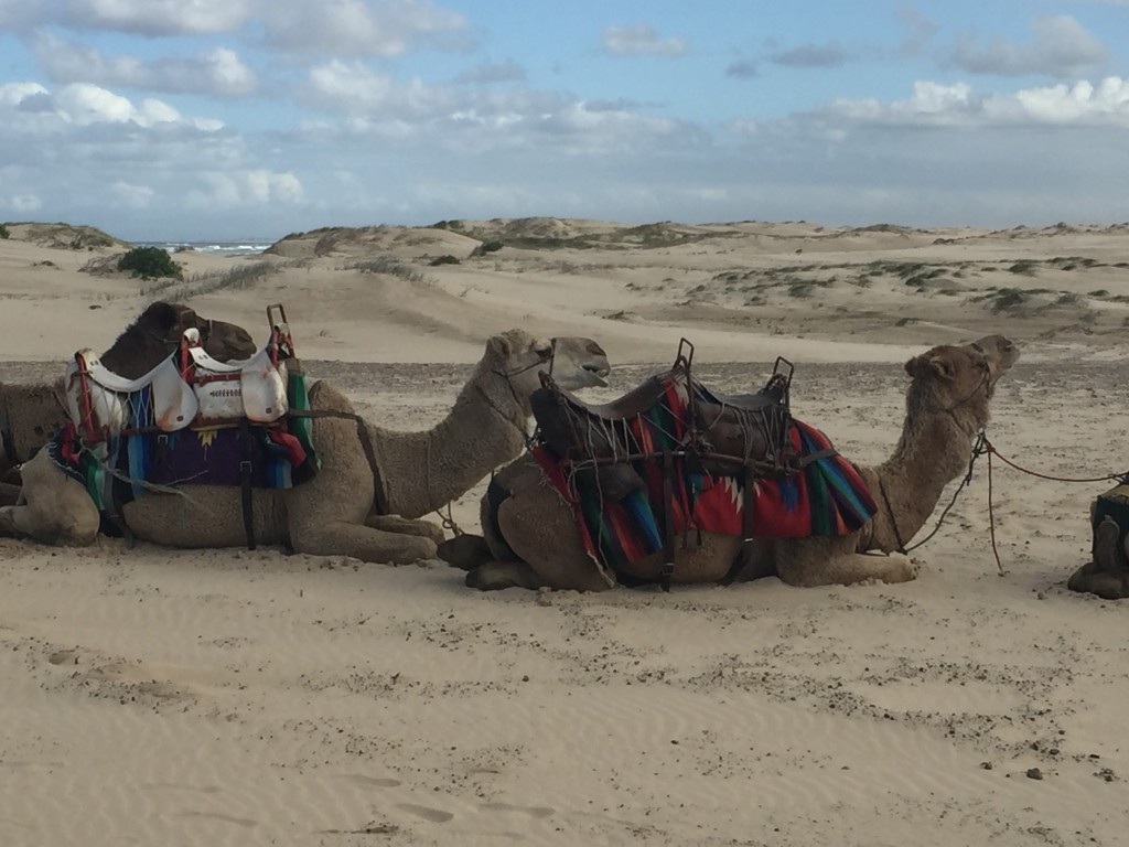 You can get a camel ride on the dunes