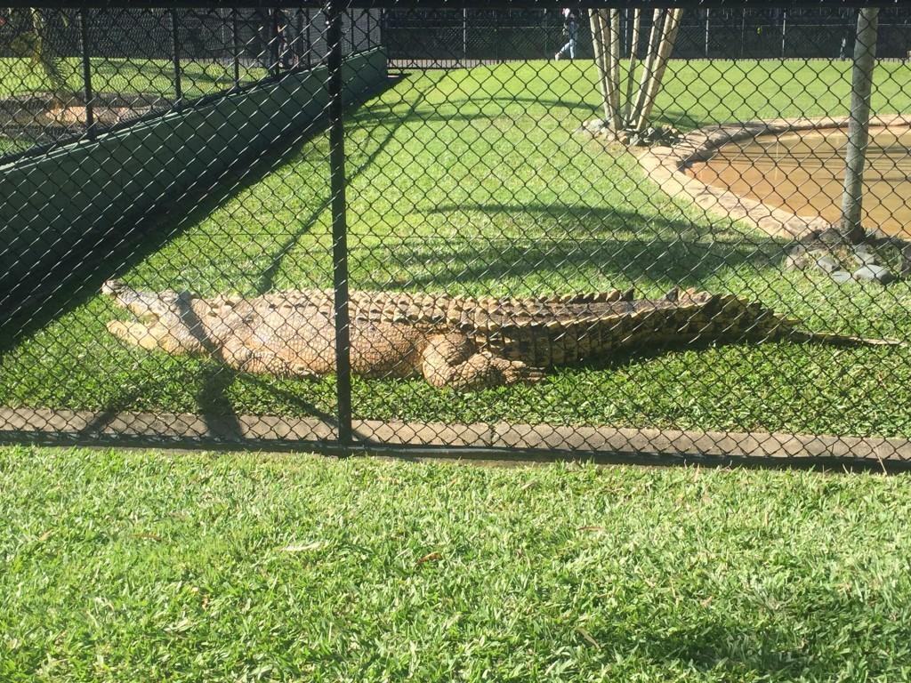 Casper the croc