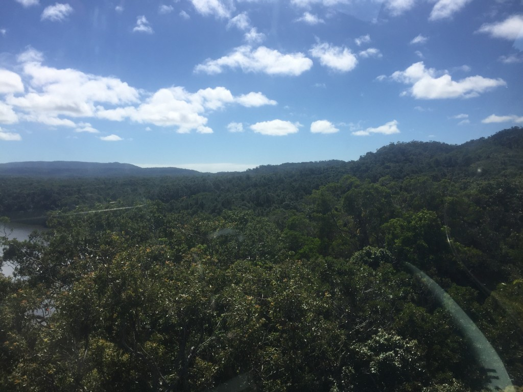 Rainforest as far as the eye can see